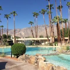 Palm Spring User Photo