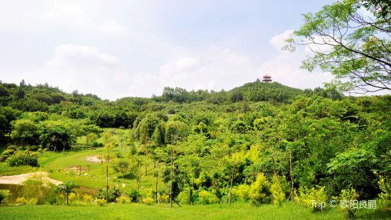 Forest Park, Quanzhou
