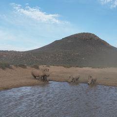 Aquila Private Game Reserve - Day Trip Safari用戶圖片