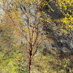 大峪溝風景區用戶圖片