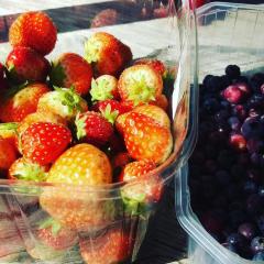 Hendrewennol Fruit Garden User Photo