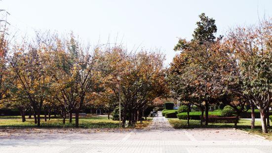 Sakura Square