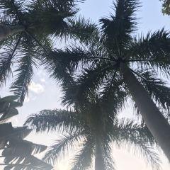 漳州雲頂溫泉SPA主題公園用戶圖片