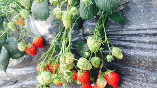 天天草莓園農家飯