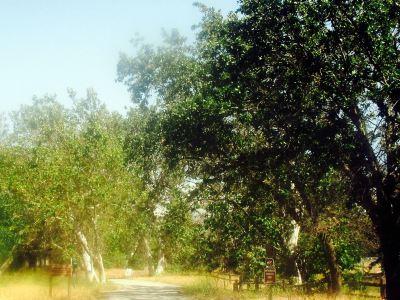 시카모어 그로브 공원