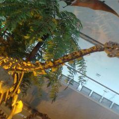 甘肅地質博物館用戶圖片