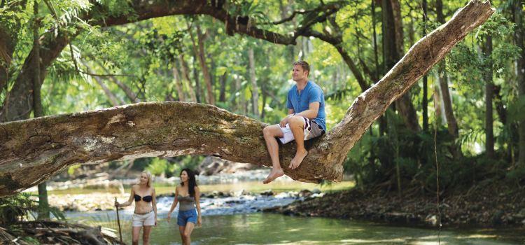 Daintree Rainforest1