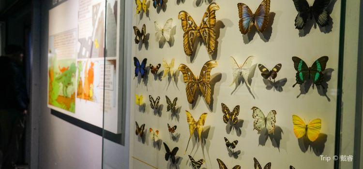 Montreal Insectarium1