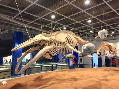 장생포고래박물관