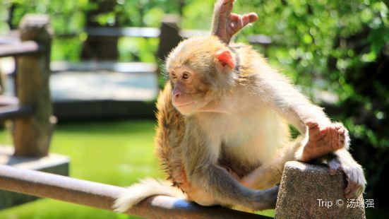 三嶺灣獼猴觀賞園