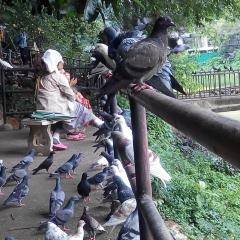 Bann Kang Wat User Photo