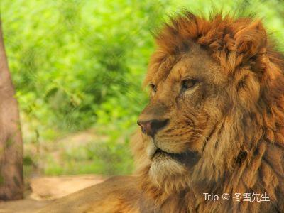 北京野生動物園