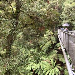 Otway Fly Treetop Adventures User Photo