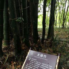 duzhuyuan User Photo