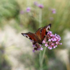 Sparrow Hills (Vorobyovy Gory) User Photo