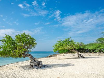 Top Things to Do in Aruba | Hot Tourist Attractions – Trip.com on map of aruba map, map of us and aruba, map of caribbean, map of divi village, map of riu palace aruba, map of aruba cruise port, map of bahamas and aruba, map of aruba sights, map of aruba renaissance, aruba sightseeing attractions, map of dutch village, map of paradise beach villas, map of eagle beach resorts, map of aruba timeshares, aruba tourist attractions, map of aruba resorts, map of islands near aruba, map of arikok national park, map of aruba beaches, map of aruba casinos,
