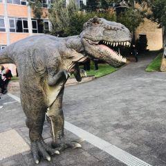 塔斯馬尼亞大學用戶圖片