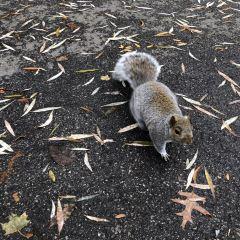 Boston Public Garden User Photo