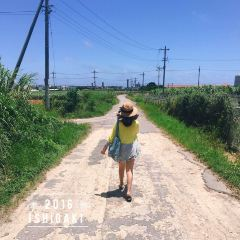 이시가키 섬 여행 사진