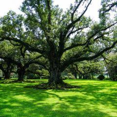 橡樹莊園用戶圖片