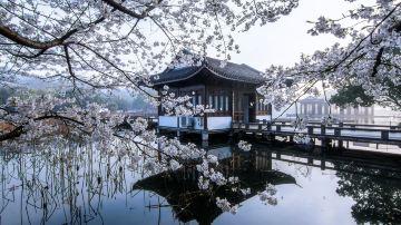 杭州-曲院风荷2