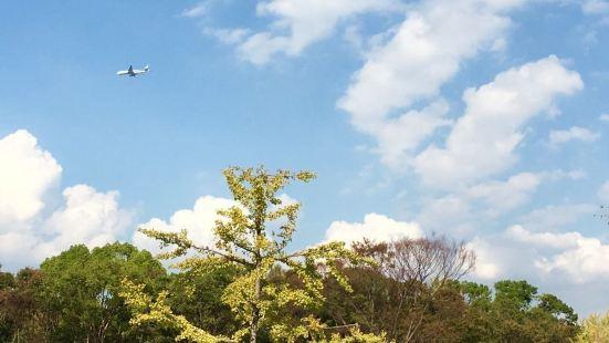 Edion Studium Hiroshima