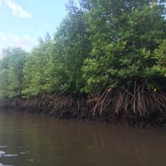 Kawa紅樹林用戶圖片