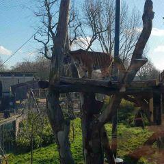 런던 동물원 여행 사진