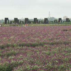 Longshou Yangwanmu Field Park User Photo