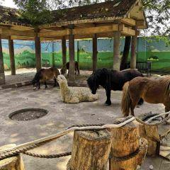 成都動物園用戶圖片