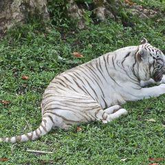 Panaewa Rainforest Zoo and Gardens 여행 사진