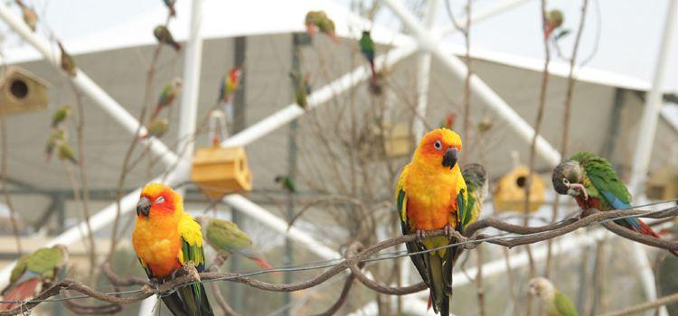 太陽錐尾鸚鵡展區2