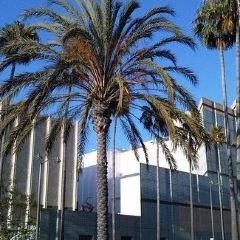 洛杉磯藝術博物館用戶圖片