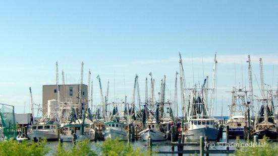 Southern Belle Fishing Tours
