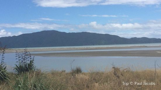 Waikanae Estuary Bird Tours