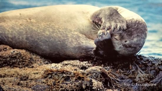 The Icelandic Seal Centre