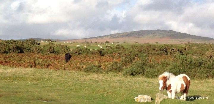 Dartmoor National Park2