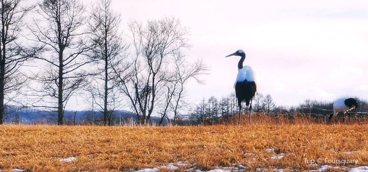 Tsurui Ito Red-crowned Crane Sanctuary2