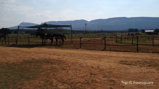 Saddle Creek Ranch Farm