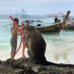 Monkey Beach User Photo
