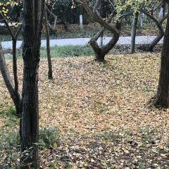 Chenzhou Nanling Botanical Garden User Photo
