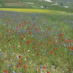 Piana di Castelluccio di Norcia User Photo