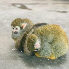 秦嶺野生動物園用戶圖片