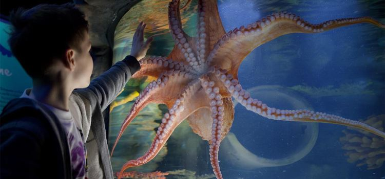 Kelly Tarlton's SEA LIFE Aquarium2