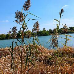 尚湖風景區用戶圖片