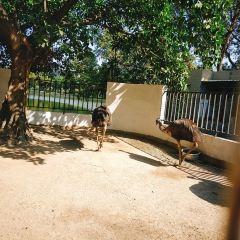 Shantou Zoo User Photo