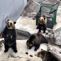 Noboribetsu Bear Park User Photo