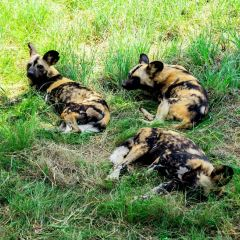 Lion & Safari Park User Photo