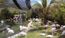 吉隆坡飞禽公园-吉隆坡-超级ctt