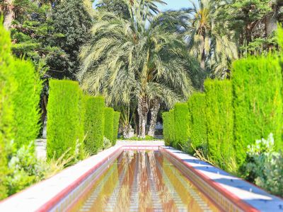 Palm Groves (Palmeral) of Elche